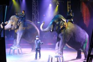 Cirque Medrano 2015 1090