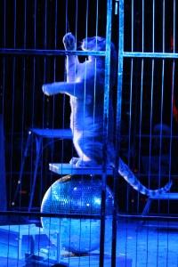 Cirque Medrano 2015 229