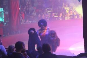 Cirque Medrano 2015 933